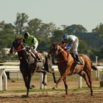 horses-210